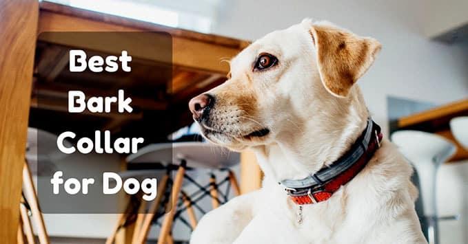 Best-Bark-Collar-2