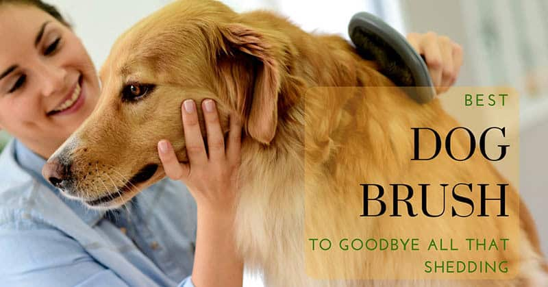 Best-Dog-Brush-9