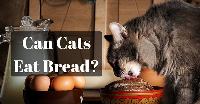 Can-Cats-Eat-Bread