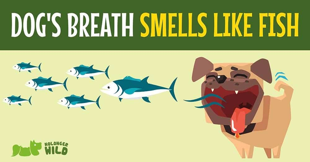 Dogs-breath-smells-like-fish-1