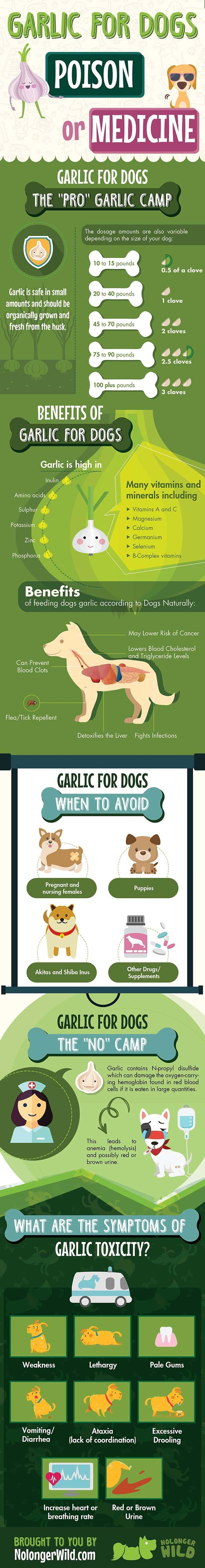 Garlic-for-Dogs-infographic