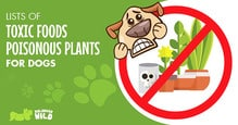 toxic-food-toxic-plants-for-dogs-1