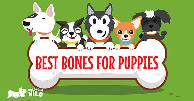 best-bones-for-puppies-1