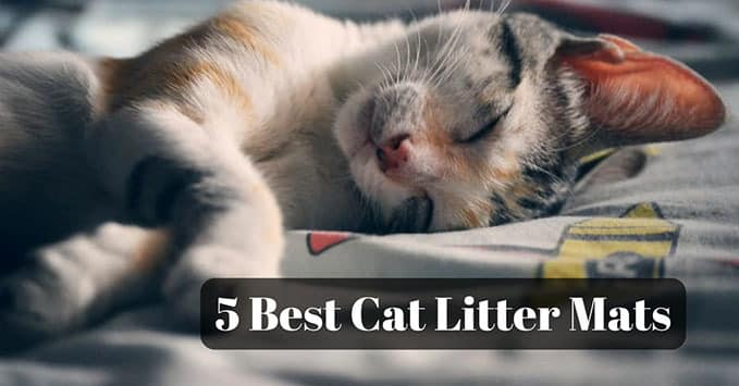 best-cat-litter-mat-1
