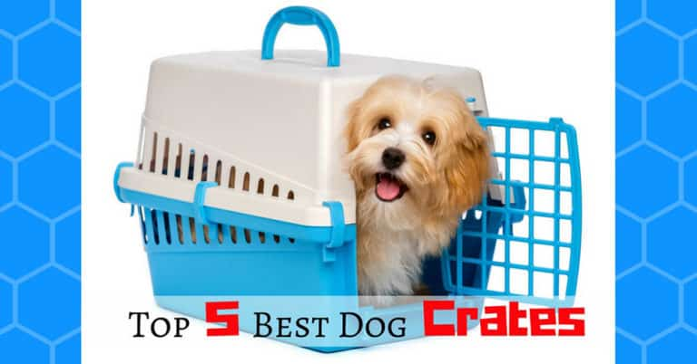 best-dog-crates-1