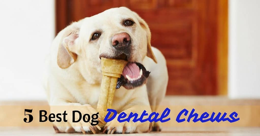 best-dog-dental-chews-1