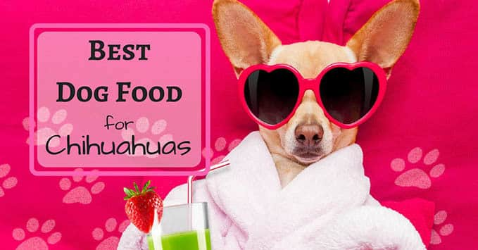 best-dog-food-for-chihuahuas-1