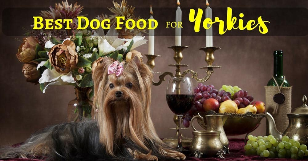 best-dog-food-for-yorkies-1
