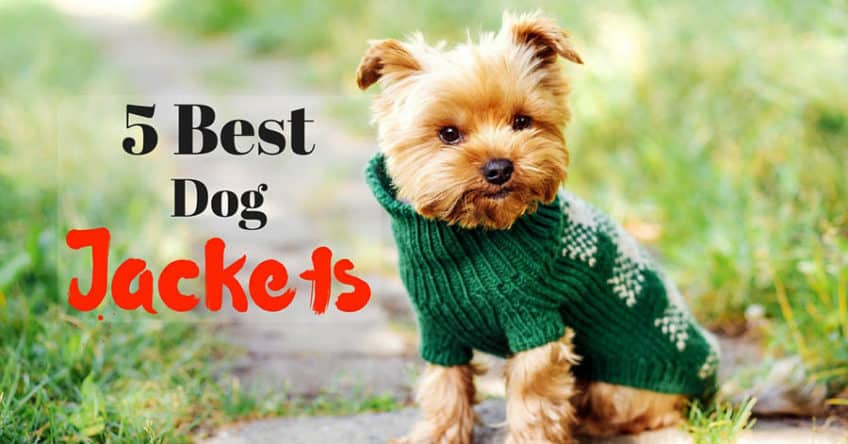 best-dog-jackets-1