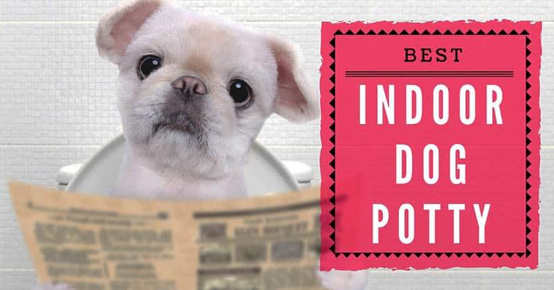 best-indoor-dog-potty-5