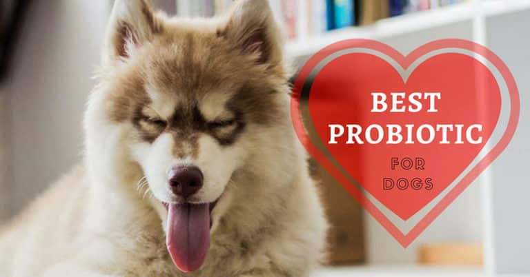 best-probiotic-for-dogs-1