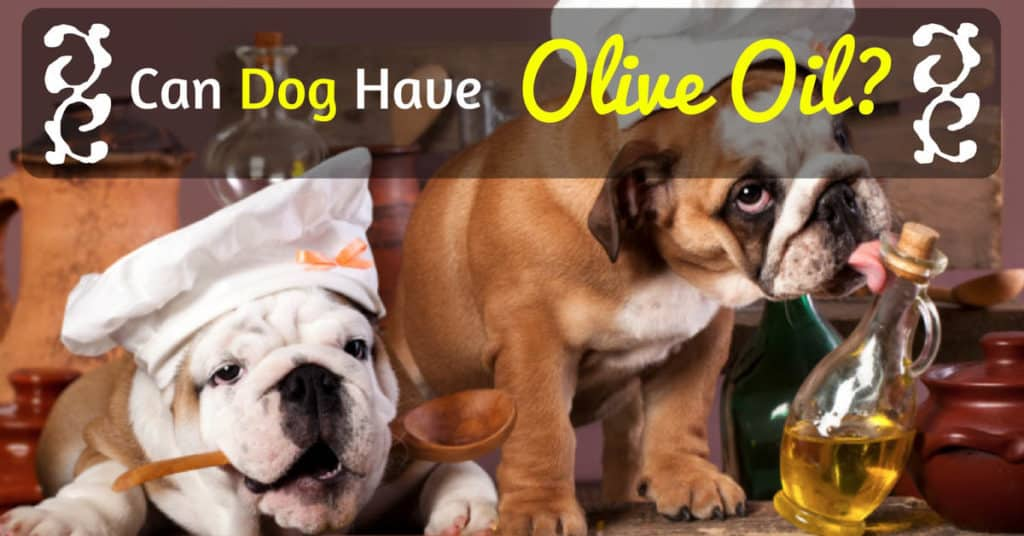 can-dog-have-olive-oil-7