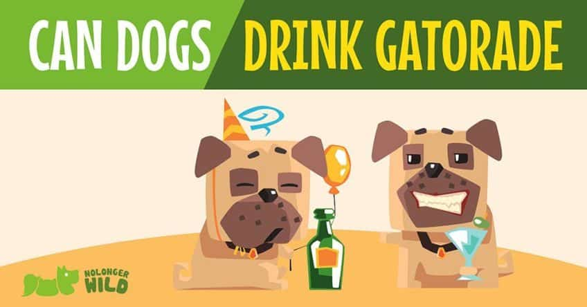 can-dogs-drink-Gatorade-1