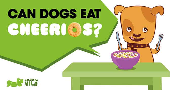 can-dogs-eat-cheerios-1