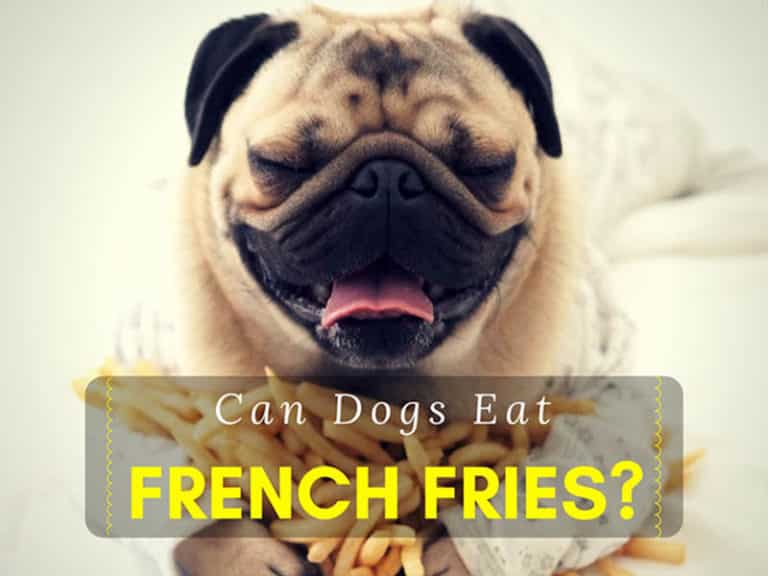 can-dogs-eat-french-fries-1