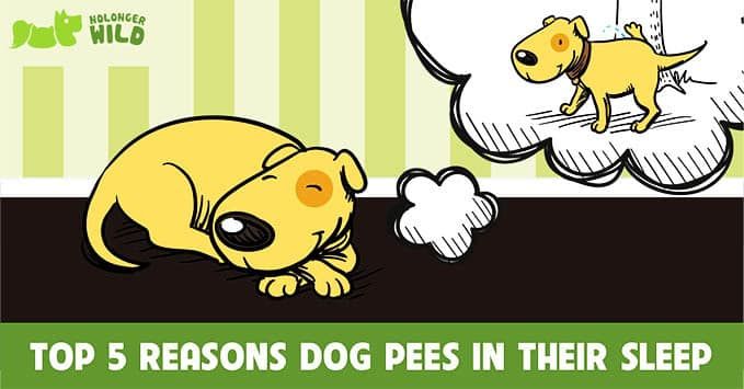 dog-pees-in-their-sleep-1
