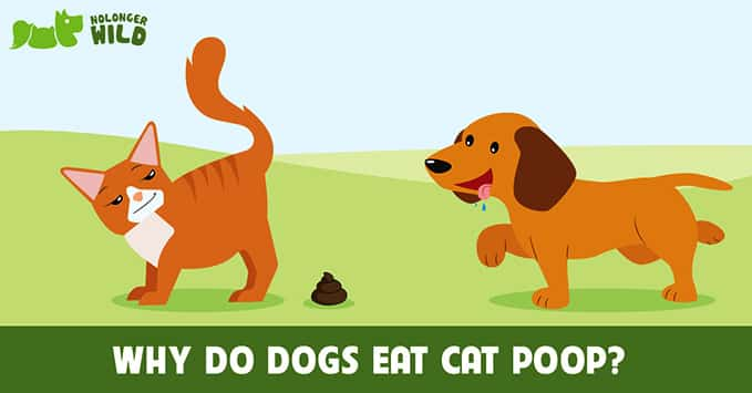 dogs-eat-cat-poop-8