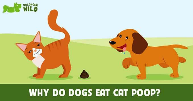 dogs-eat-cat-poop-8
