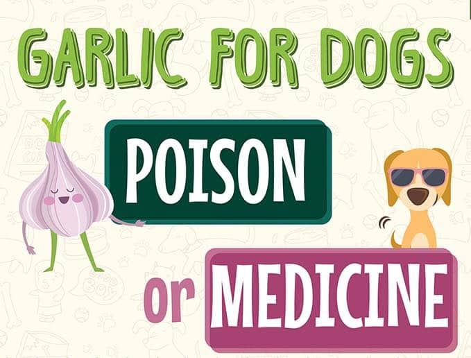 garlic-for-dogs-1