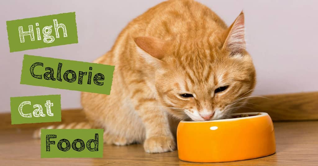 high-calorie-cat-food-5