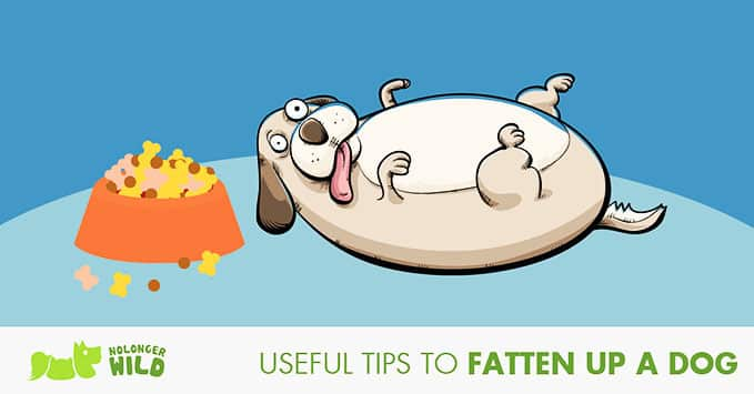 how-to-fatten-up-a-dog-1