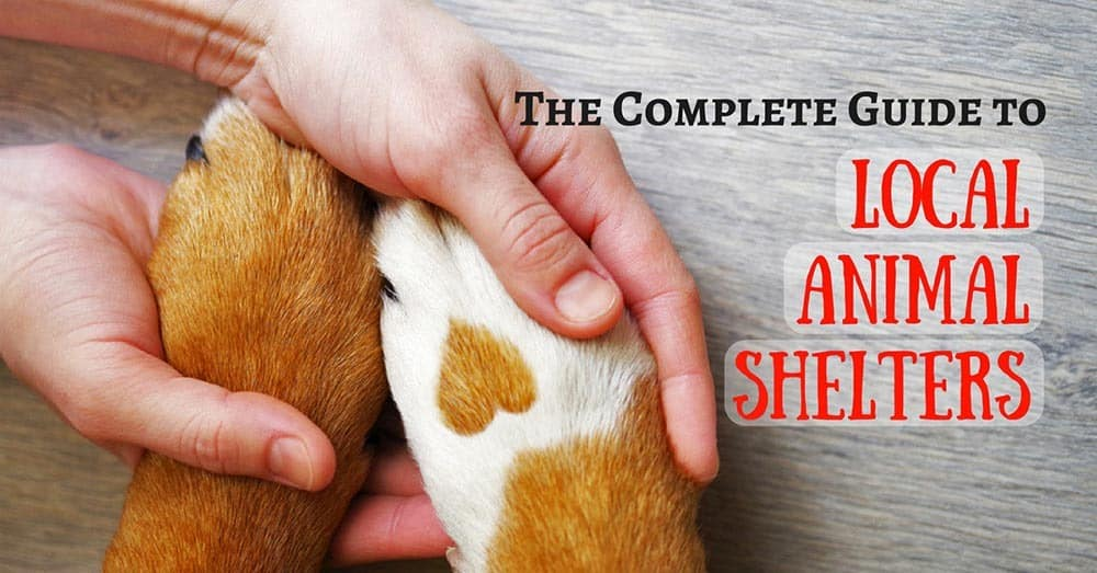 local-animal-shelters-1