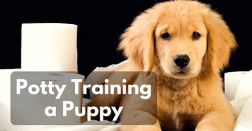 potty-training-a-puppy-1