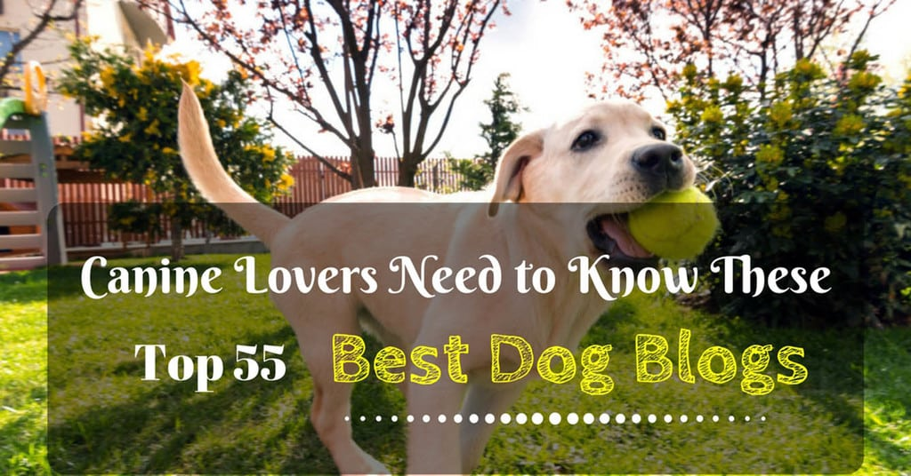 top-55-best-dog-blogs-1