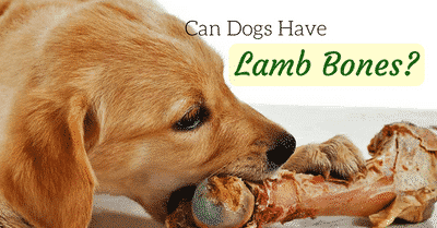 can-dogs-have-lamb-bones-2