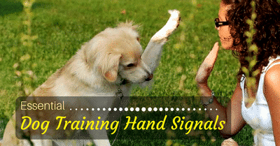 best-dog-training-hand-signals-1