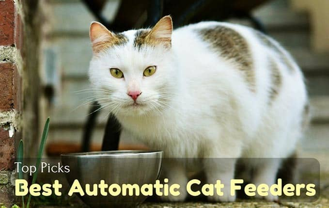 Best-Automatic-Cat-Feeder