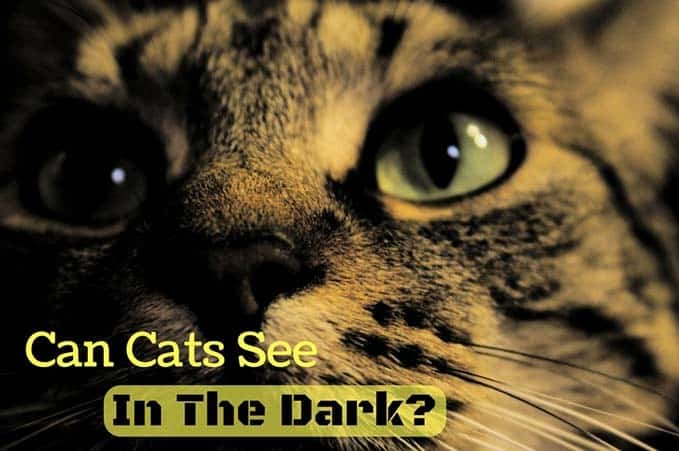 Can-Cats-See-In-The-Dark-1