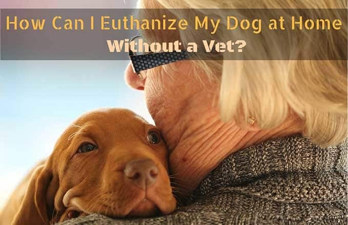 How-Can-I-Euthanize-My-Dog-at-Home-1