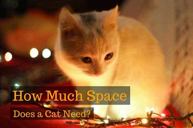 how-much-space-does-cat-need-1