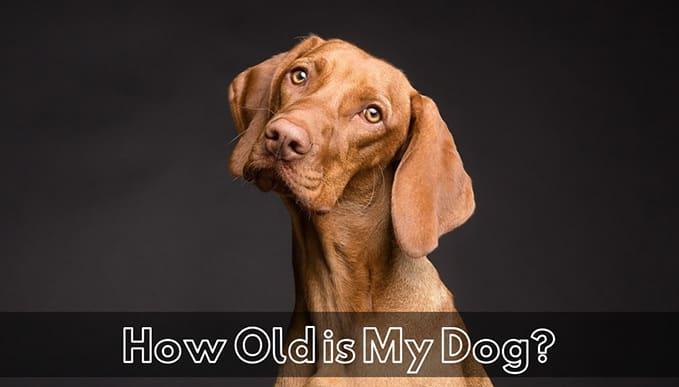 How-Old-is-My-Dog-5