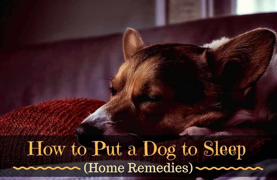 How-to-Put-a-Dog-to-Sleep-1