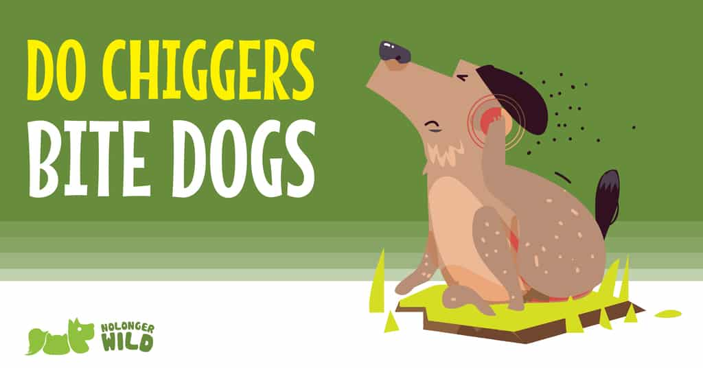 do-chiggers-bite-dogs-1