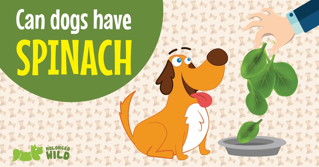 can-dogs-have-spinach-1