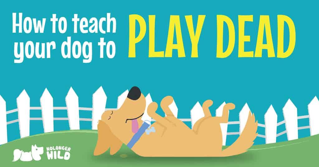 how-to-teach-dog-to-play-dead-1