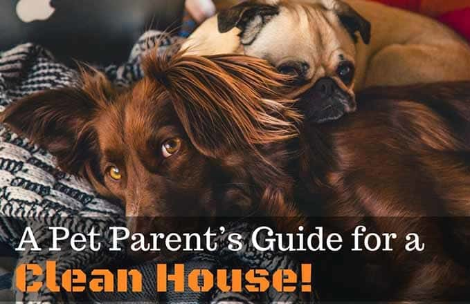 a-pet-parent-guides-for-clean-house-5
