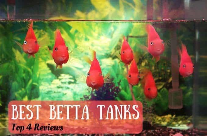 best-betta-tank-1