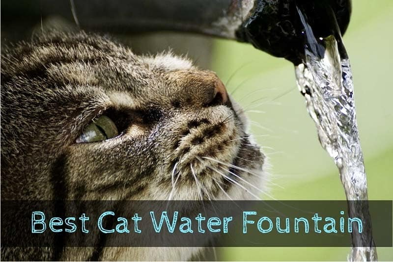best-cat-water-fountain-1