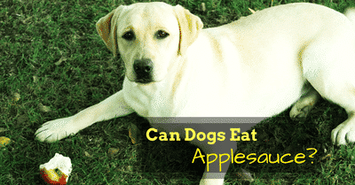can-dogs-eat-applesauce-2