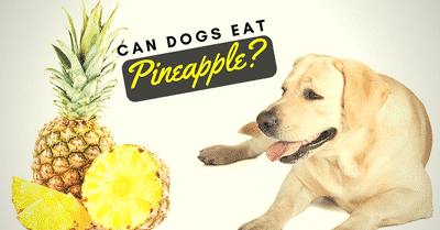 can-dogs-eat-pineapples-2