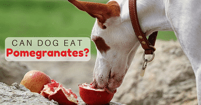 can-dogs-eat-pomegranates-2