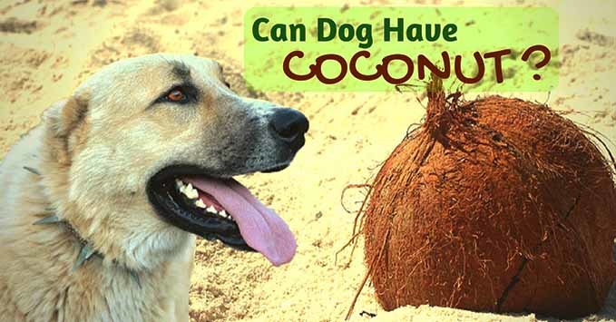 can-dogs-have-coconut-1