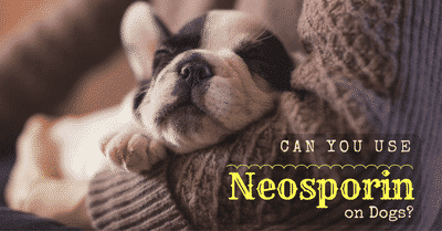 can-you-use-neosporin-on-dogs-2