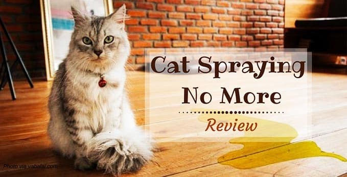 cat-spraying-no-more-review-11