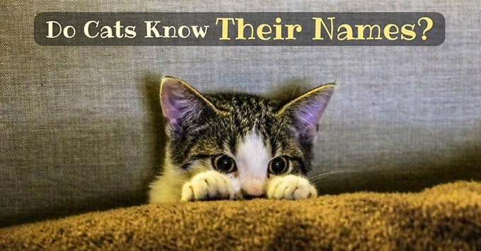 do-cats-know-their-names-5