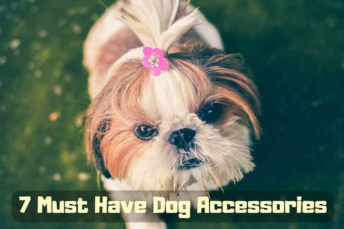 dog-accessories-7
